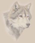 White Wolf Spirits